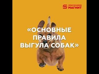 «Основные правила выгула собак»