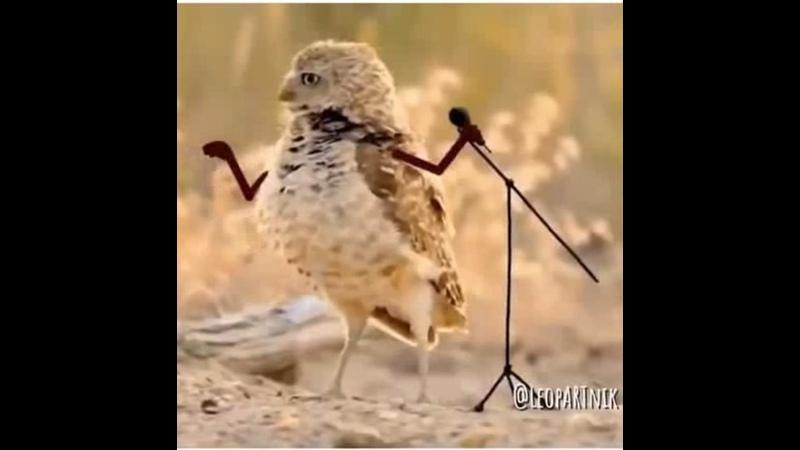 Птички с пририсованными ручками..