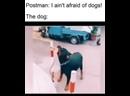 Говоришь, собак не боишься