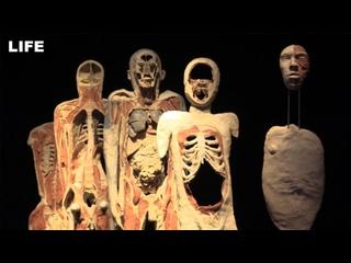 Выставка человеческих тел и органов в Москве