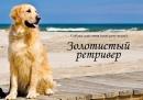Юлия Лабовская фотография #19
