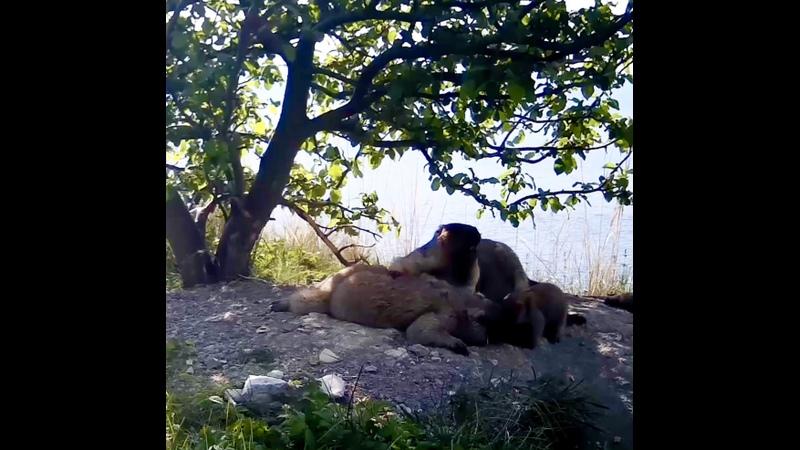 Видео от ФГБУ Национальный парк Сенгилеевские горы