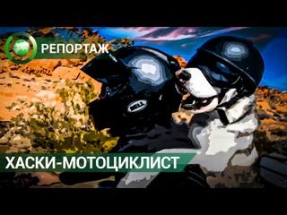Престарелый хаски обожает кататься с хозяином на мотоцикле по Америке. ФАН-ТВ