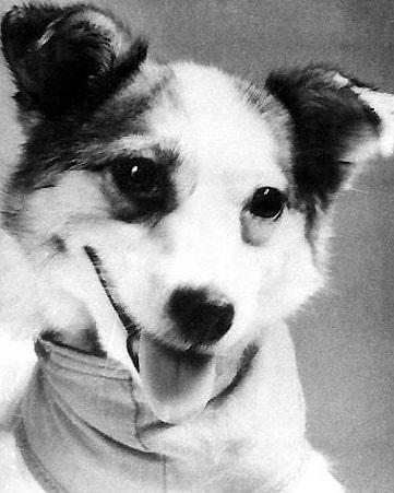Шестьдесят лет назад, 25 марта 1961 года, с космодрома Байконур был запущен космический аппарат «Спутник-10» с собакой Звёздочкой и манекеном космонавта на борту