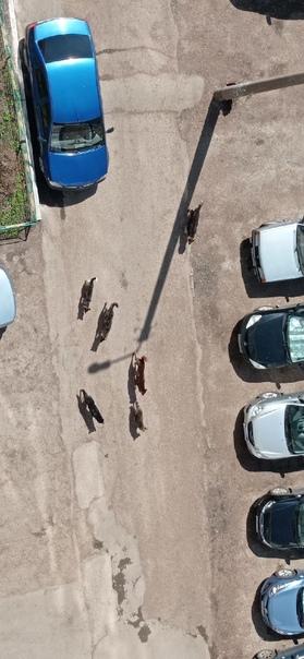 По Губкина 28 стая собак , агрессивных осторожнее