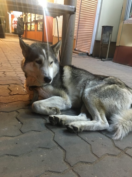 Воронеж, район ост. Общежитие. 15.10 найден пёс ла...