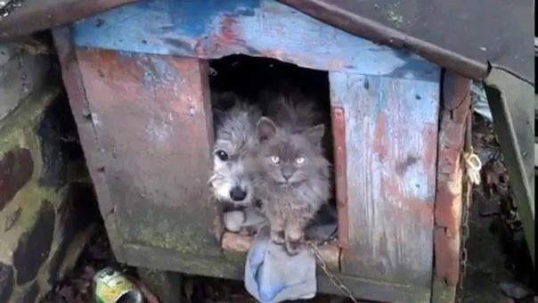 Они встретились на помойке Два больших и голодных зверя.... Кот и собака. Пес обитал здесь несколько дней и уже считал себя местным хозяином. Кот пришел позже, припадая на поцарапанную настом