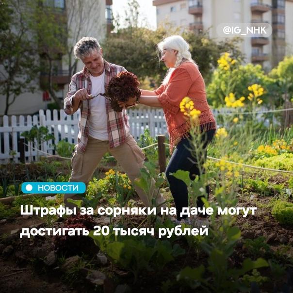 Россиян известили о размере штрафов за сорняки на ...