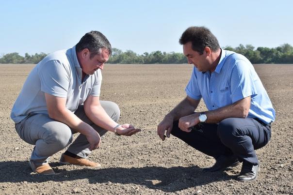 На полях «Березовского» сеют пшеницу и убирают под...
