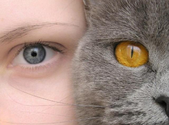 что надо знать о кошках,