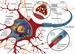 Importanza della mielinizzazione e della guaina mielinica
