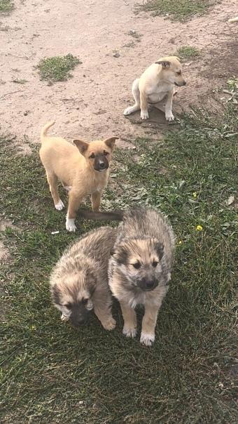 На углу улицы Юрия Громова живут хорошенькие щенки...