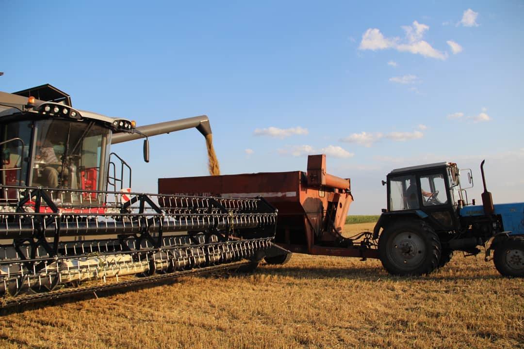 В Петровском районе зерновые и зернобобовые культуры в аграрных хозяйствах убраны на площади 41 776 гектаров