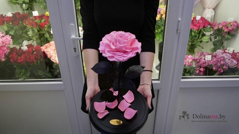 Как выглядит большая розовая роза в колбе - Купить в Минске с доставкой