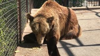 Милое семейство бурых медведей! Тайган Lovely family of brown bears! Taigan