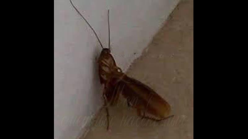TOP7 смешных насекомых