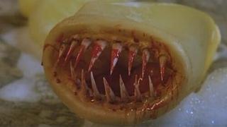 Кино-дурь: Презерватив-убийца. 1996.(фантастика+ужасы))