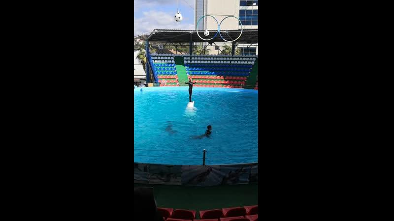 Адлер дельфинарий