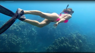 CRYSTAL CLEAR Tropical Dive