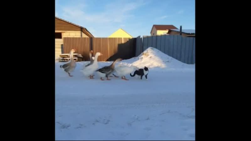 Вышла братва на кота