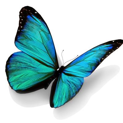 Olga Butterfly, Москва