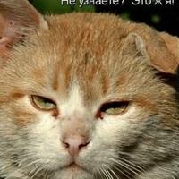 Фотография Антона Нечкина ВКонтакте