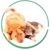Зооволонтеры Чернигова-помощь бездомным животным
