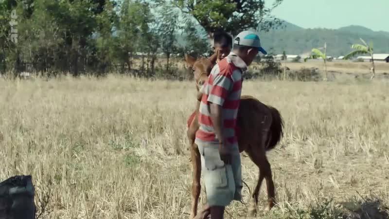 Indonésie Les enfants jockeys de Sumbawa 080965 000 F