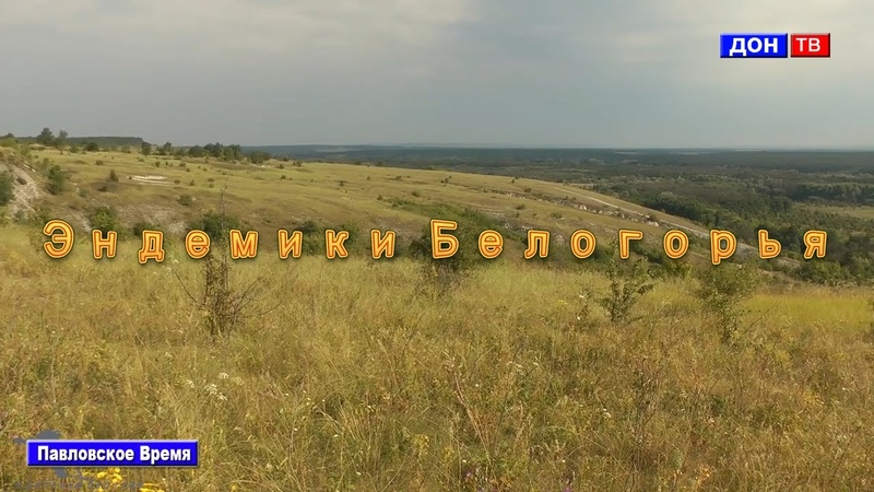 Эндемики Белогорья г Павловск Воронежской обл