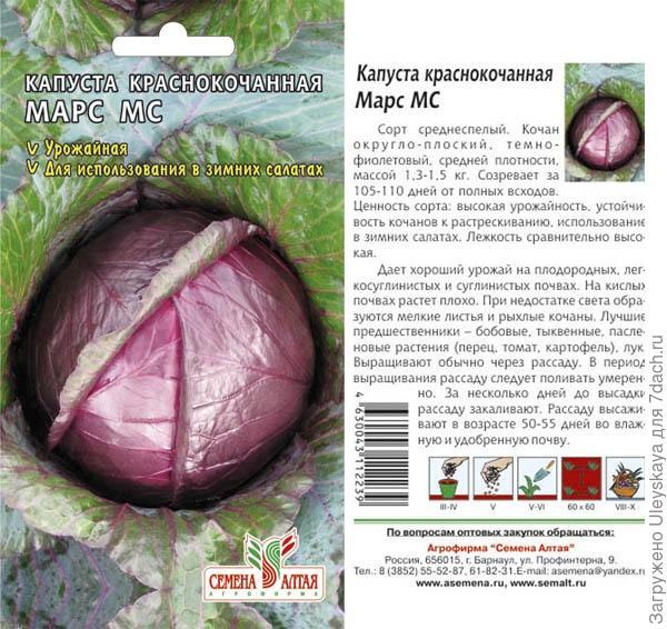Краснокочанная капуста  овощная королева в пурпурной мантии.