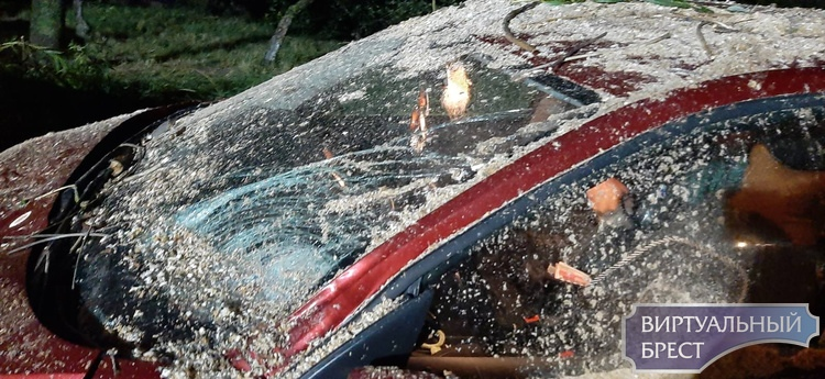 Наглядное свидетельство того, что опасно оставлять автомобиль в зоне падения деревьев