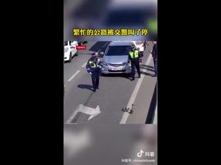 Полицейские в Краснодаре остановили поток автомобилей, чтобы утка с утятами могли перейти дорогу.