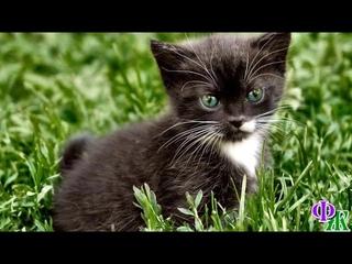 Ангелом - хранителем может быть и маленькая чёрная кошечка