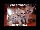 Веселые картинки. Смешные коты и кошки с надписями.